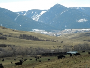Cattle Ranch in the Big Horn community