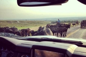 Traffic Jam in Sheridan County